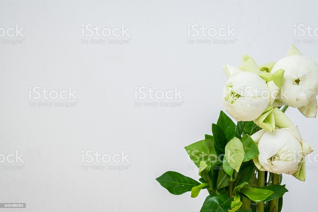 Flowers or lotus flowers with concrete wall. stock photo