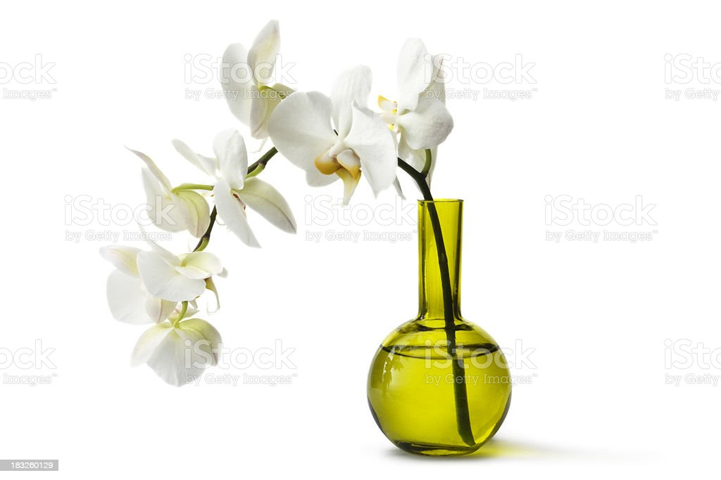 Flowers: Orchid in Vase stock photo
