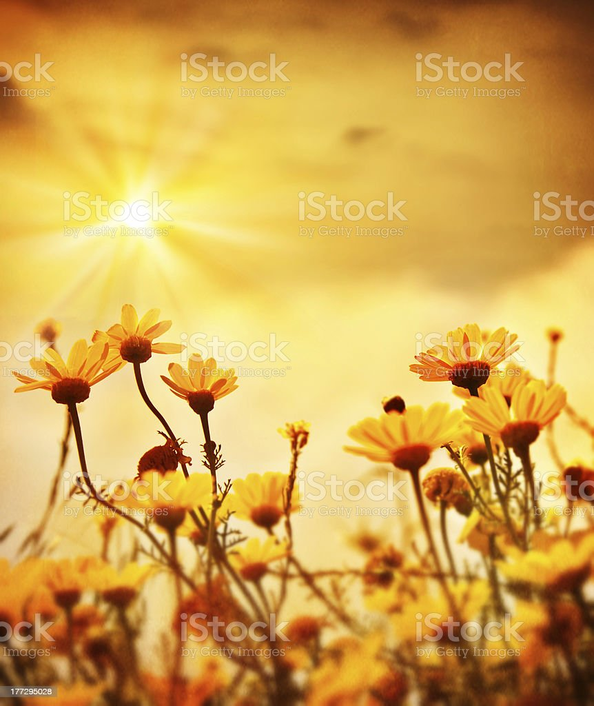 Flowers over warm sunset royalty-free stock photo