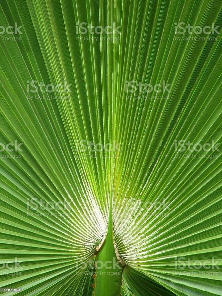 Flowers - palm stock photo