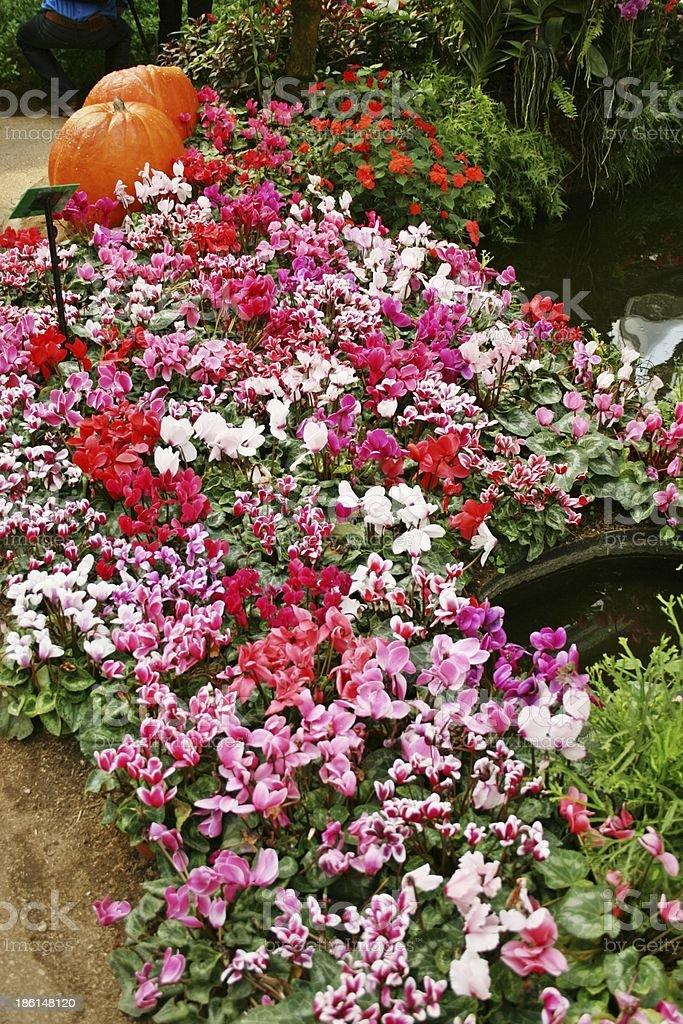 Путь цветы в красивом страны дома Стоковые фото Стоковая фотография