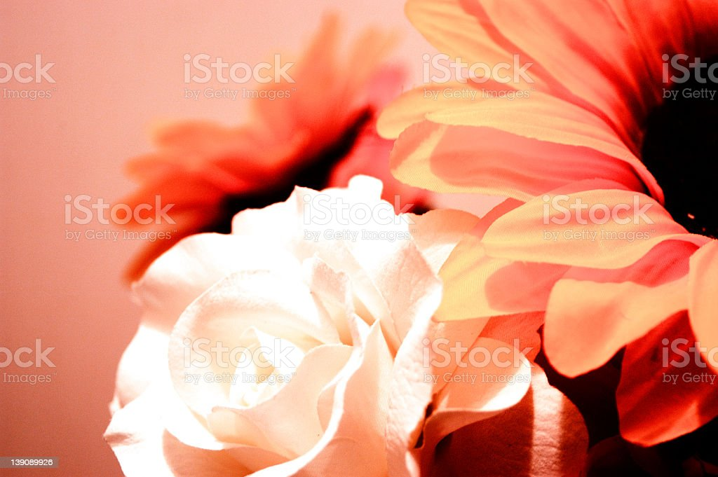 Flowers #2 royalty-free stock photo