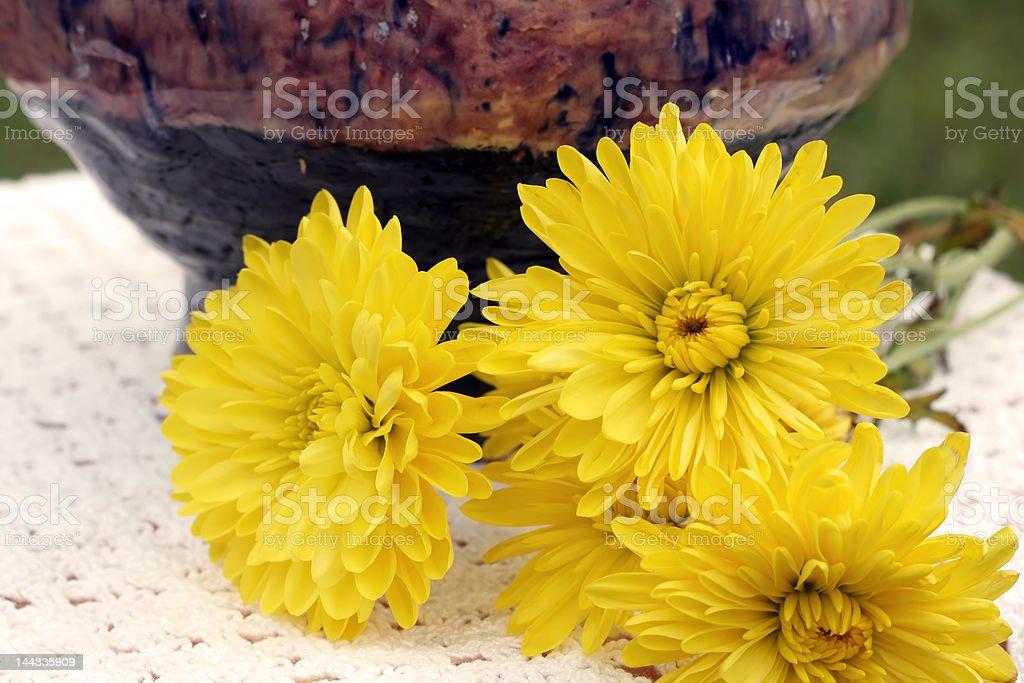 Kwiaty zbiór zdjęć royalty-free