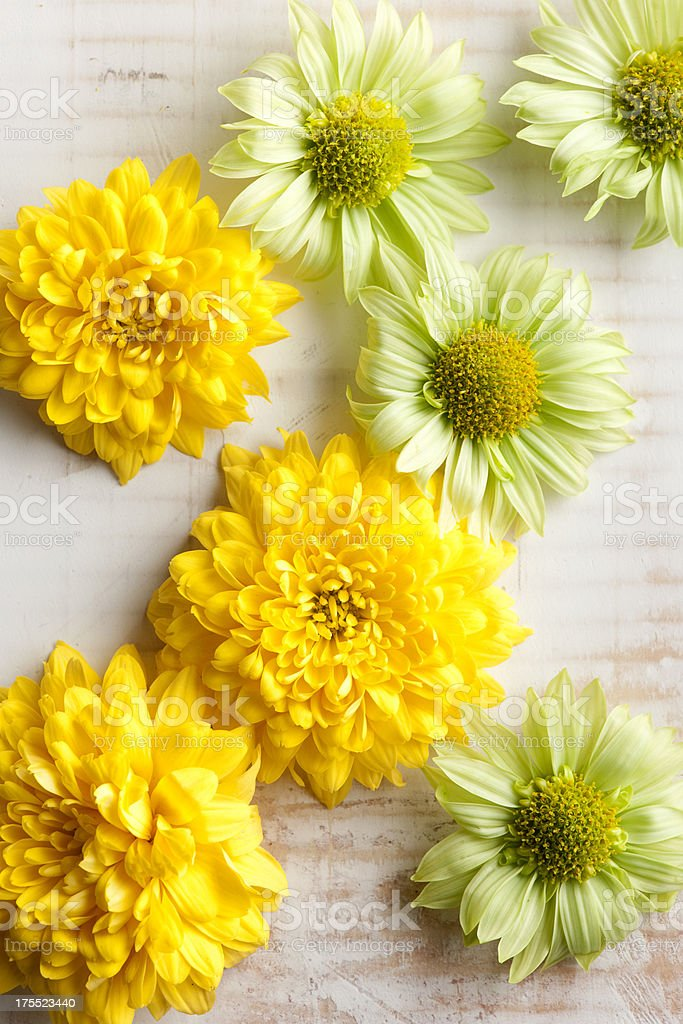 Flowers. stock photo
