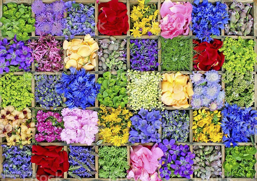 Des fleurs photo libre de droits