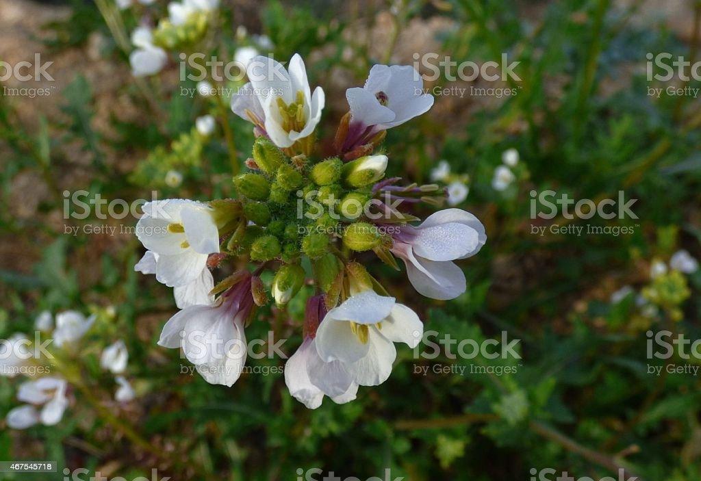 Flores foto royalty-free