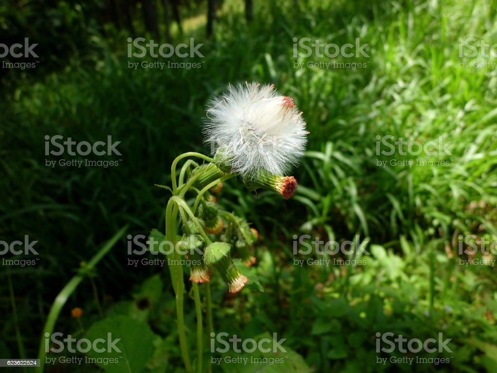 Fiori  foto stock royalty-free