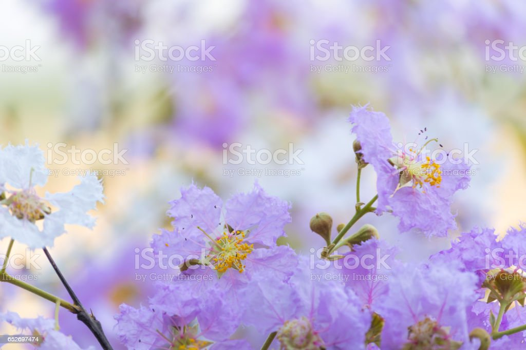 Flowers stock photo