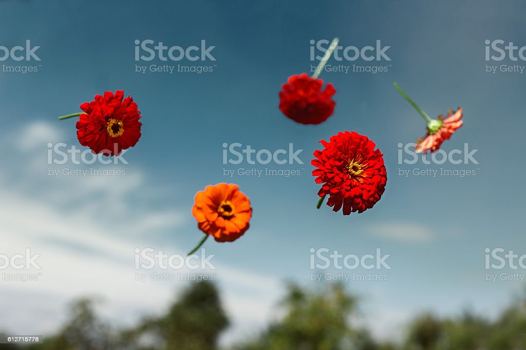 Flowers planted float in weightlessness stock photo