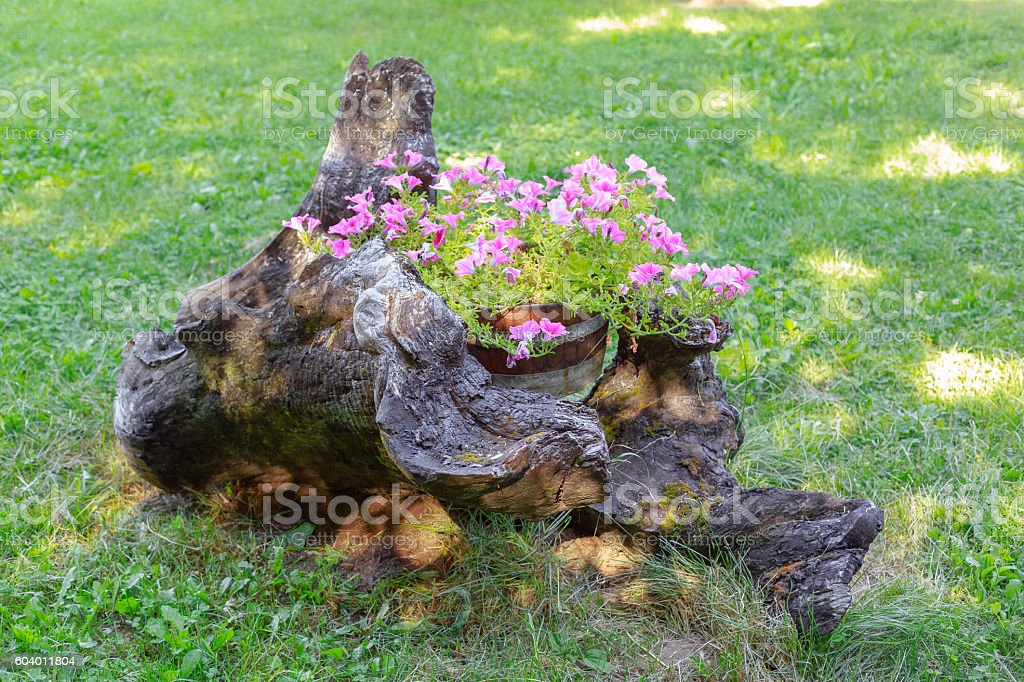 Flowers planted in a tree trunk. Floral arrangement in nature foto royalty-free