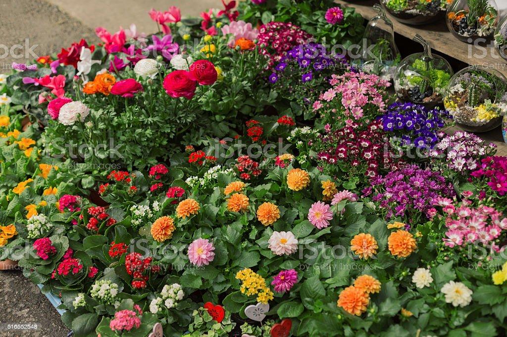 Flowers pot stock photo