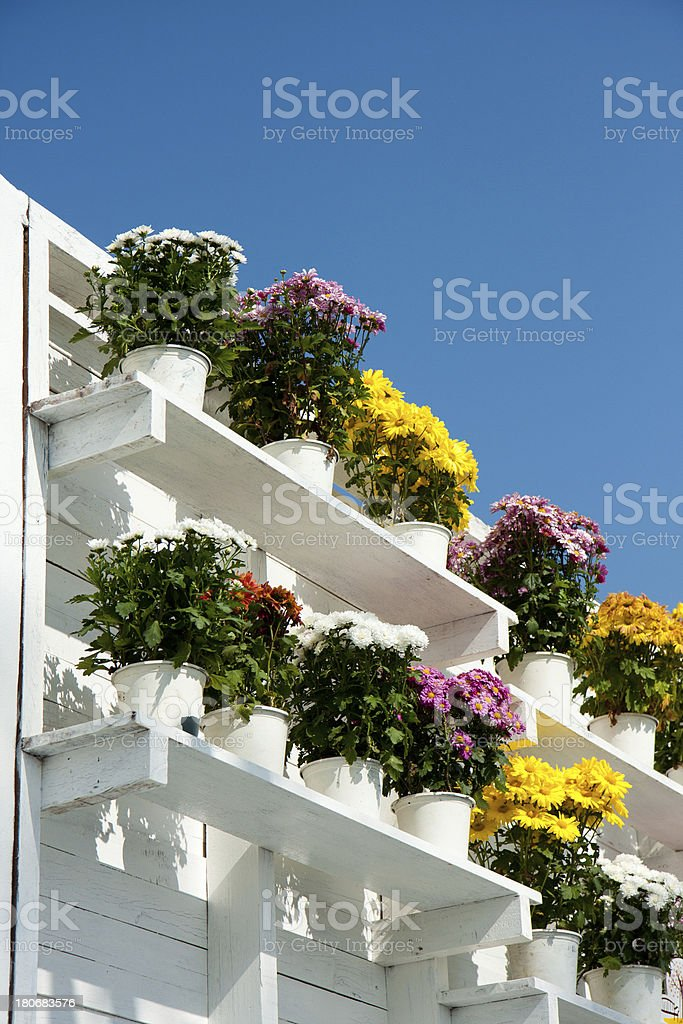 Flowers pots on white shelf with blue sky background royalty-free stock photo