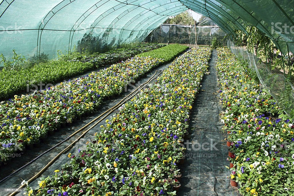 Flowers Production royalty-free stock photo