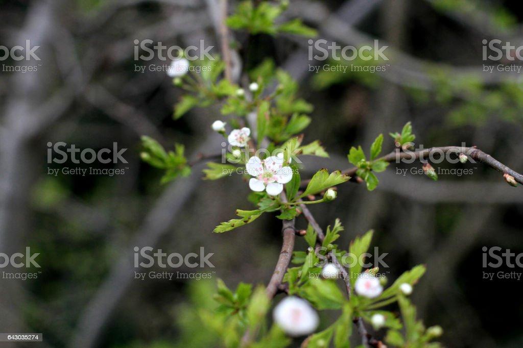 Flowers - Regents Park - London stock photo