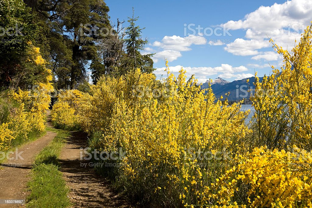 Flowers road royalty-free stock photo