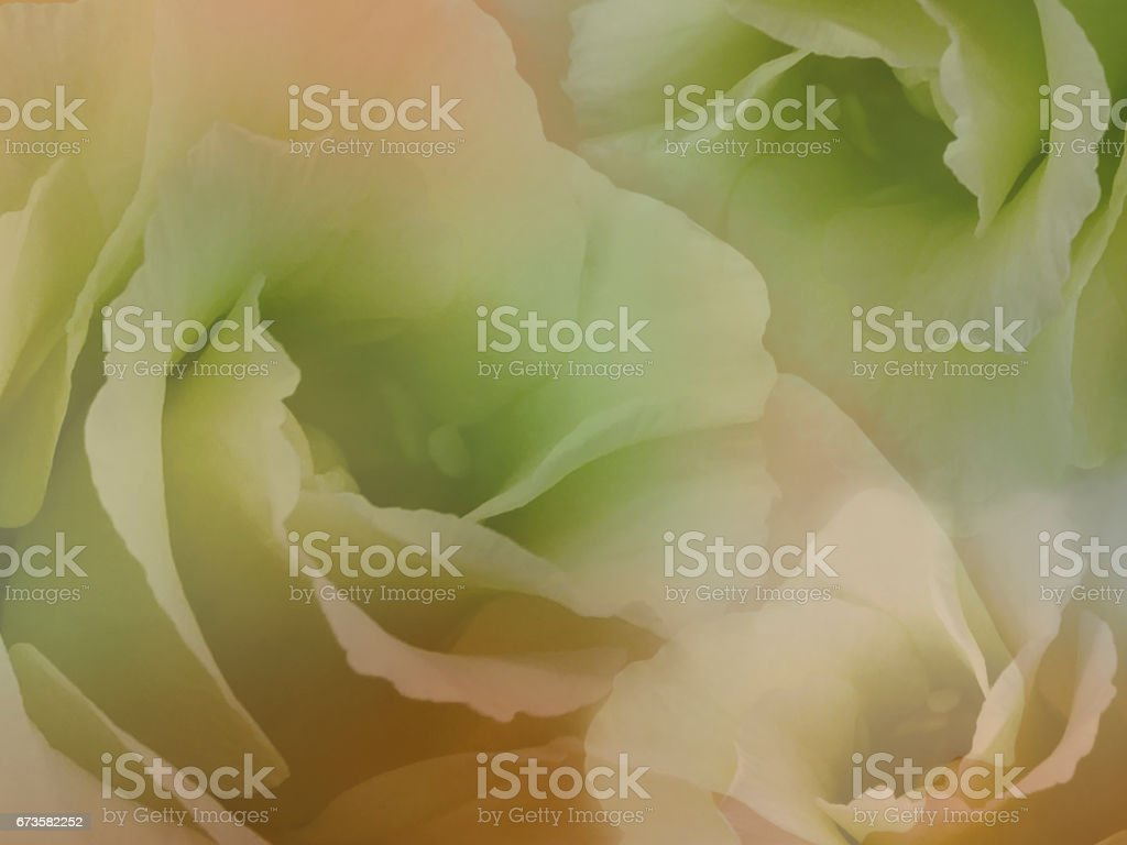 Flowers roses on blurry orange-green background . White  roses flowers.  Floral collage.  Flower composition. Nature. . stock photo