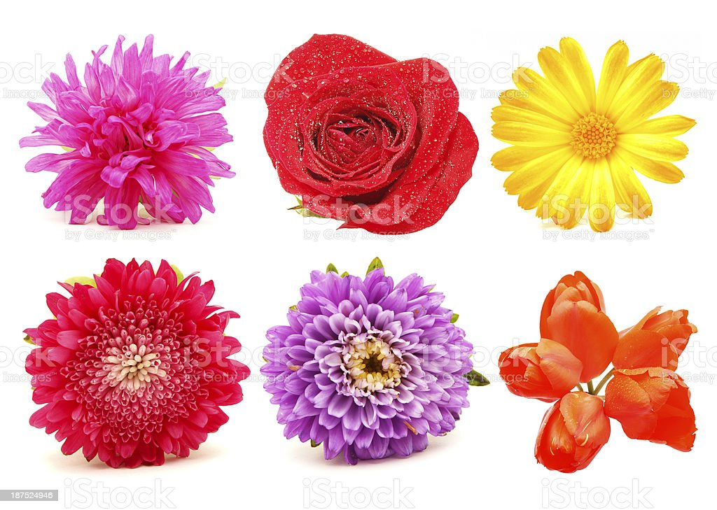 Flowers. Set royalty-free stock photo