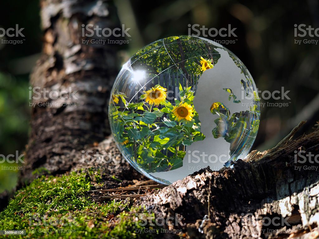 Flowers sunflowers reflected in a transparent bowl. Sphere in the...