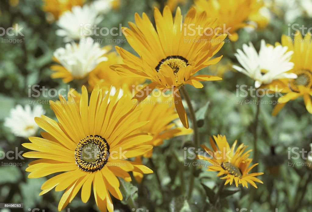 Flowers That Brighten Your Day royalty-free stock photo