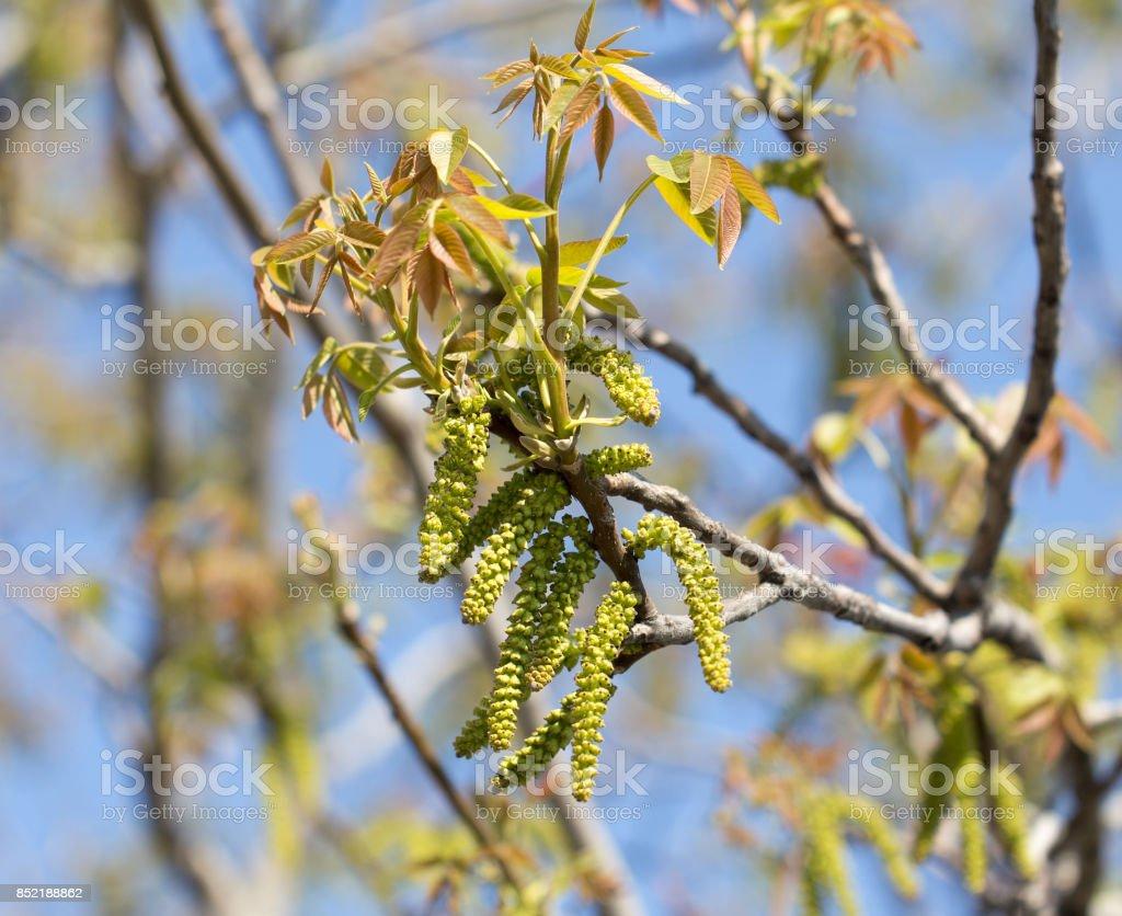 flowers walnut stock photo