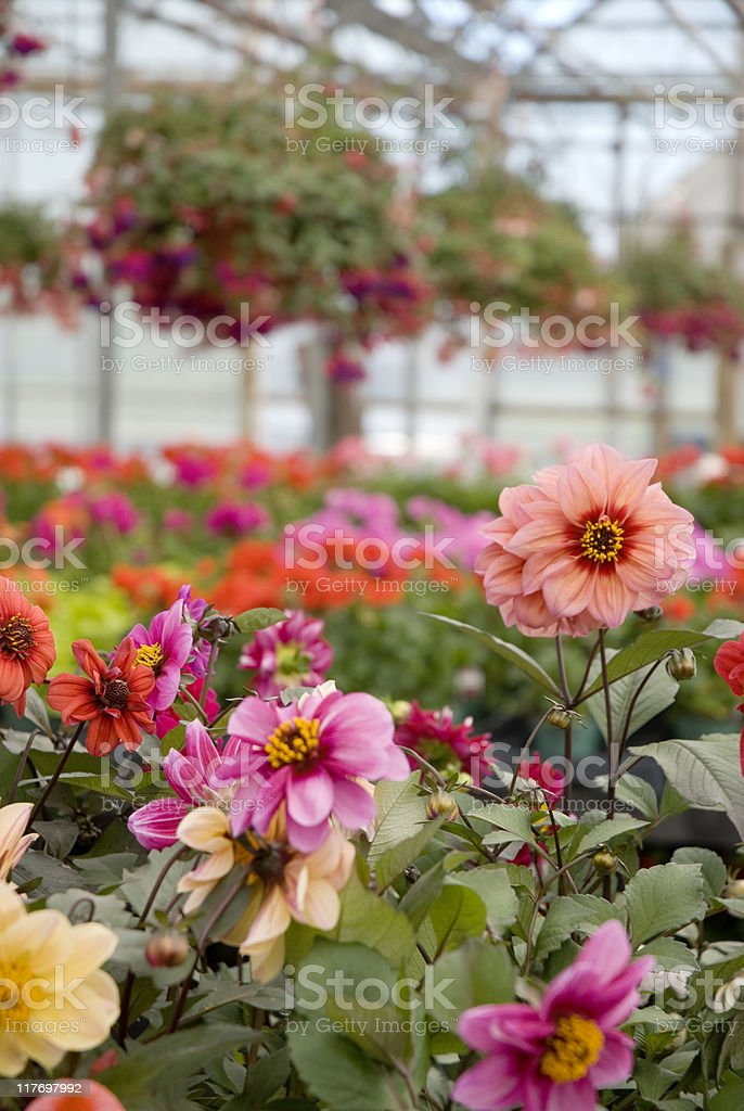 Flowers with Background royalty-free stock photo