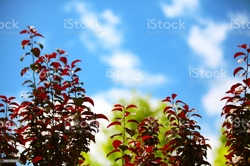 Flowers with clouds on blue sky stock photo