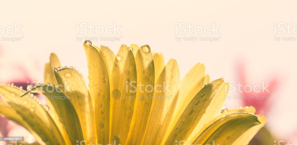 Flowers with dew in the morning stock photo