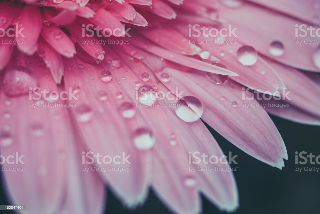 flowers with filter effect retro vintage style stock photo