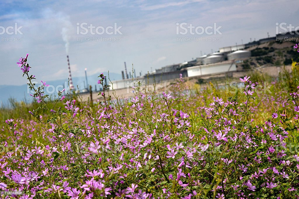 Flowers with heavy industry stock photo