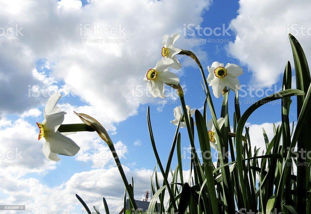 Flowerses Altaya stock photo