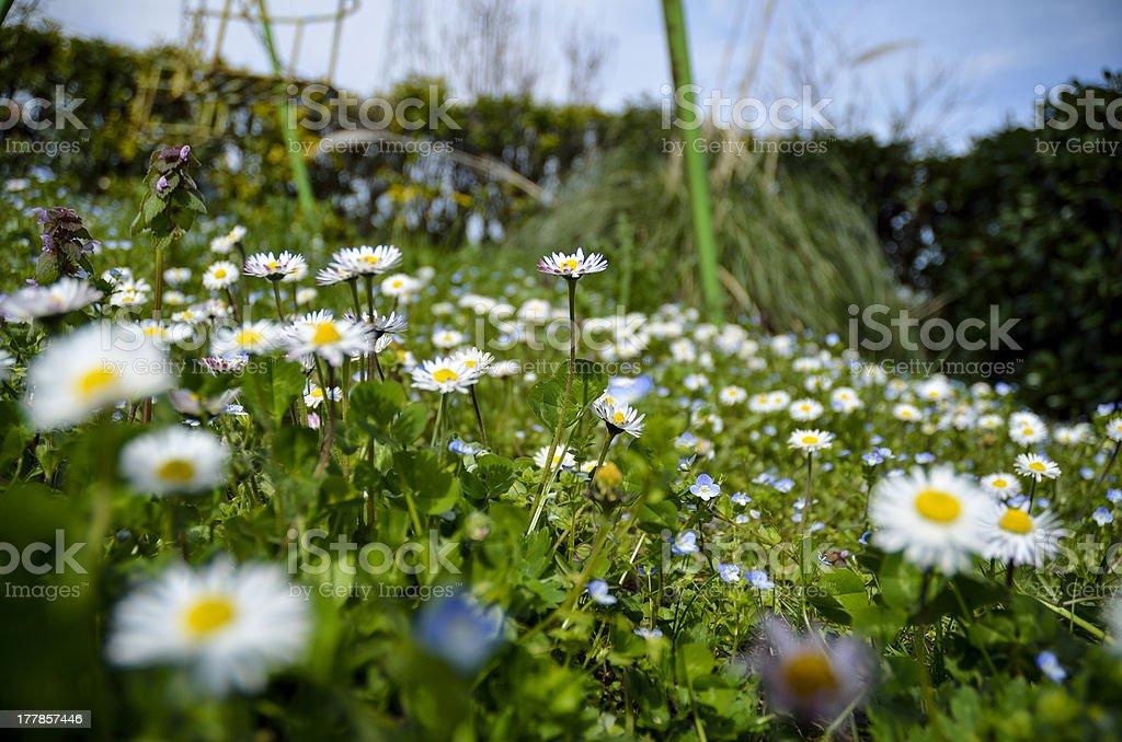 flowery meadow stock photo