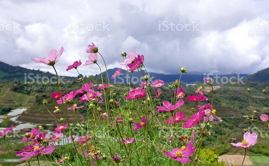 flowes royalty-free stock photo
