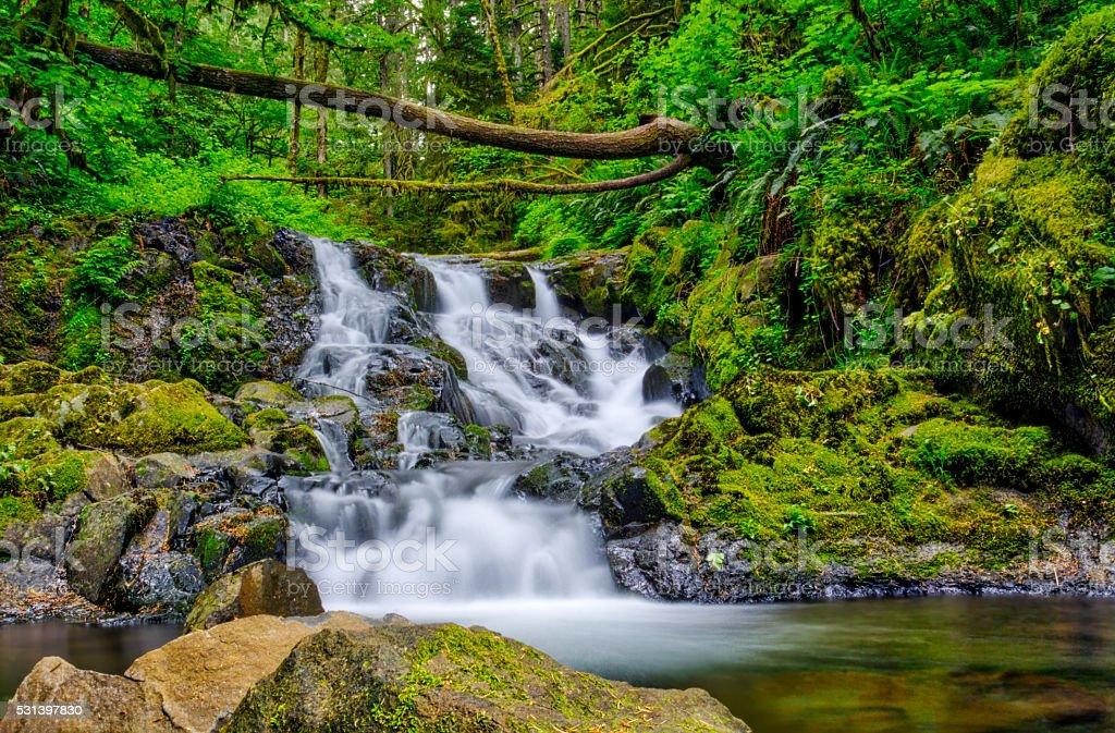 Течет ручей — Ущелье реки Колумбия Стоковые фото Стоковая фотография