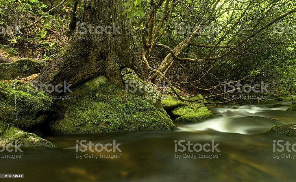 Flowing Mountain Stream and Big Tree royalty-free stock photo