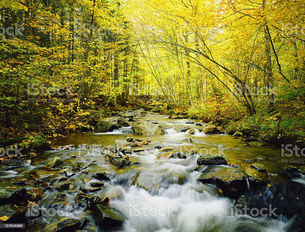 A flowing river with autumn trees in yellow in Vermont royalty-free stock photo