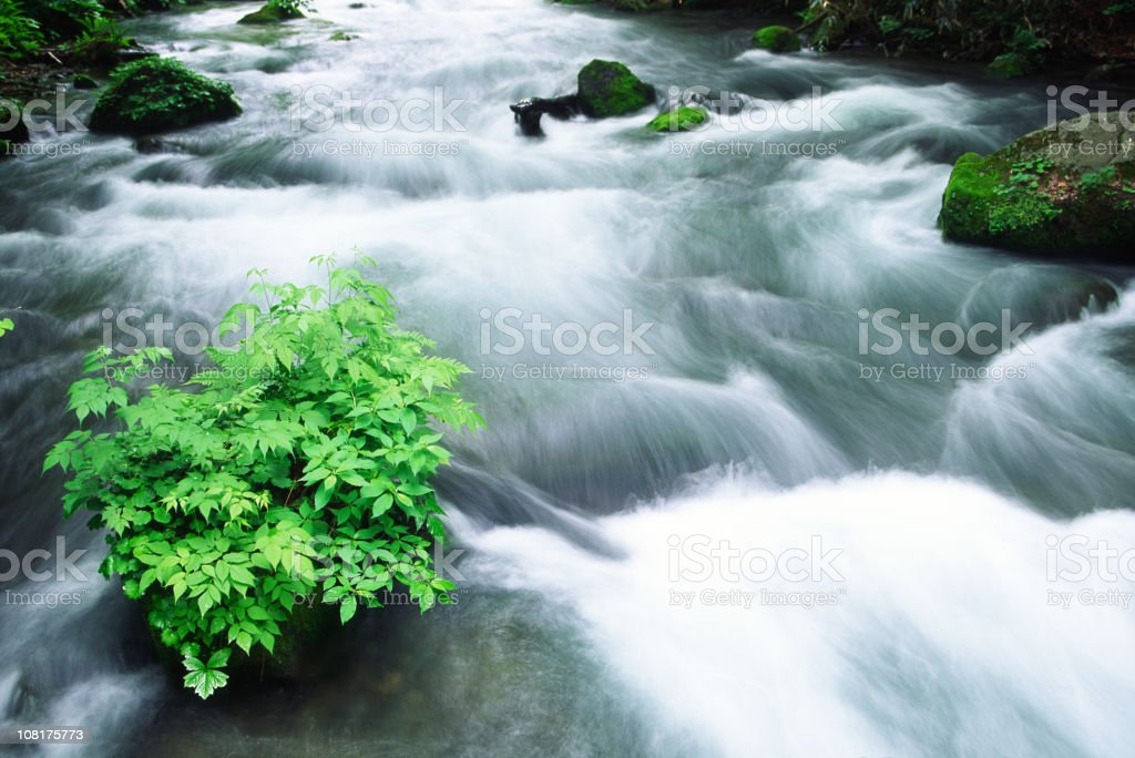 Flowing Stream royalty-free stock photo