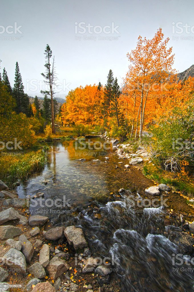 Flowing Stream with Fall Colors in the Sierras stock photo