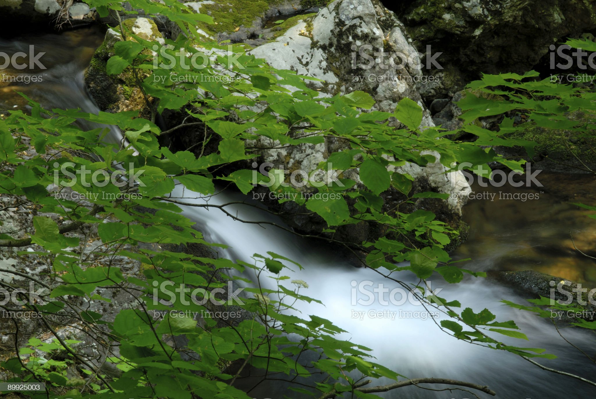 Flowing Water and Bush royalty-free stock photo