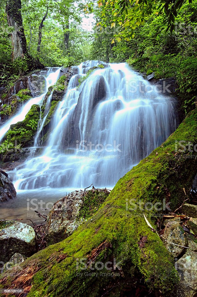 Flowing water in wilderness forest stock photo
