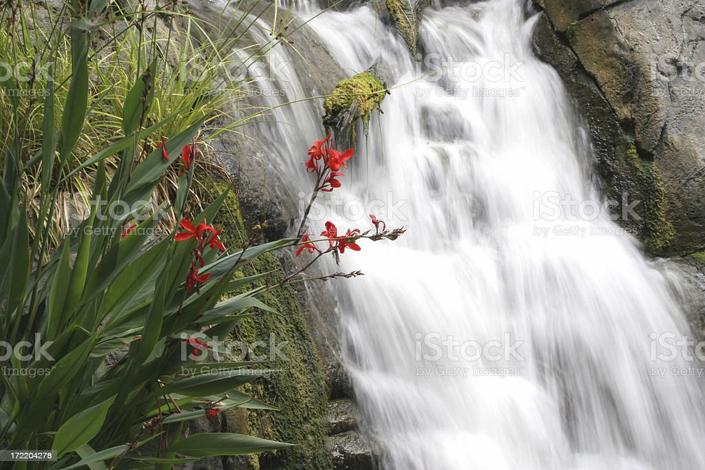 Flowing water with flowers royalty-free stock photo