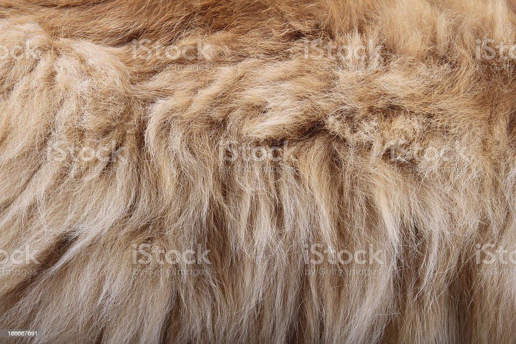 fluffy animal fur texture royalty-free stock photo