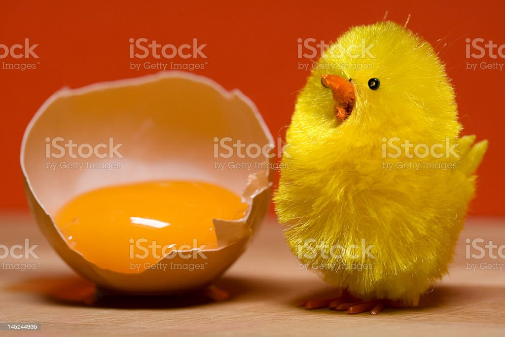 Fluffy chick and egg royalty-free stock photo