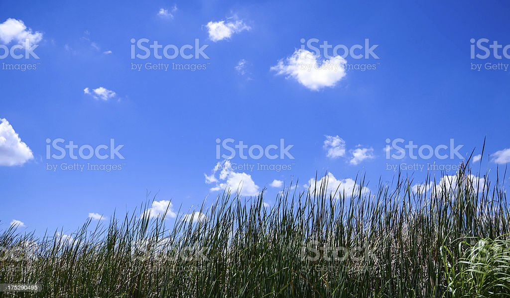 Fluffy cloud the shape-heart, on a blue sky with meadow. royalty-free stock photo