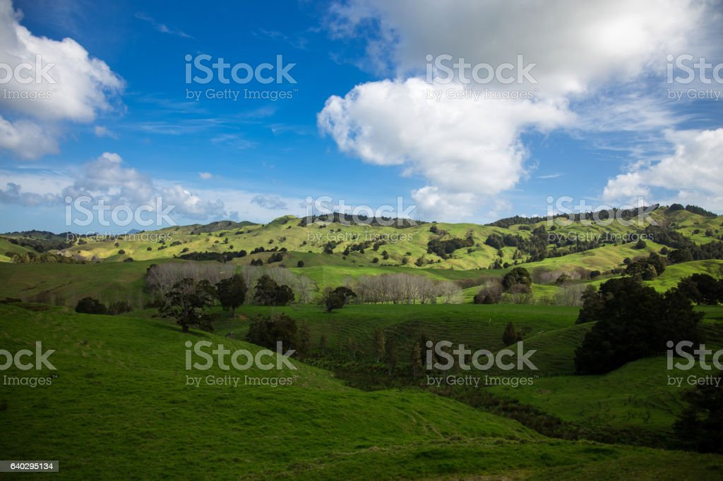 Fluffy Clouds on Spring Day, Northland, New Zealand stock photo
