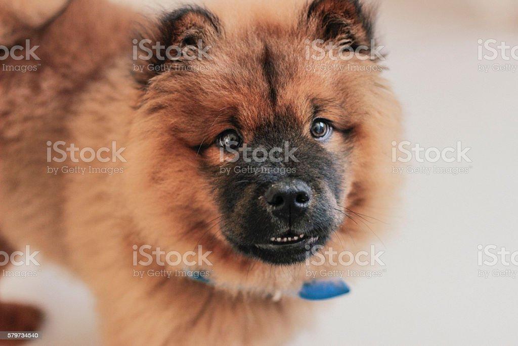 fluffy dog stock photo