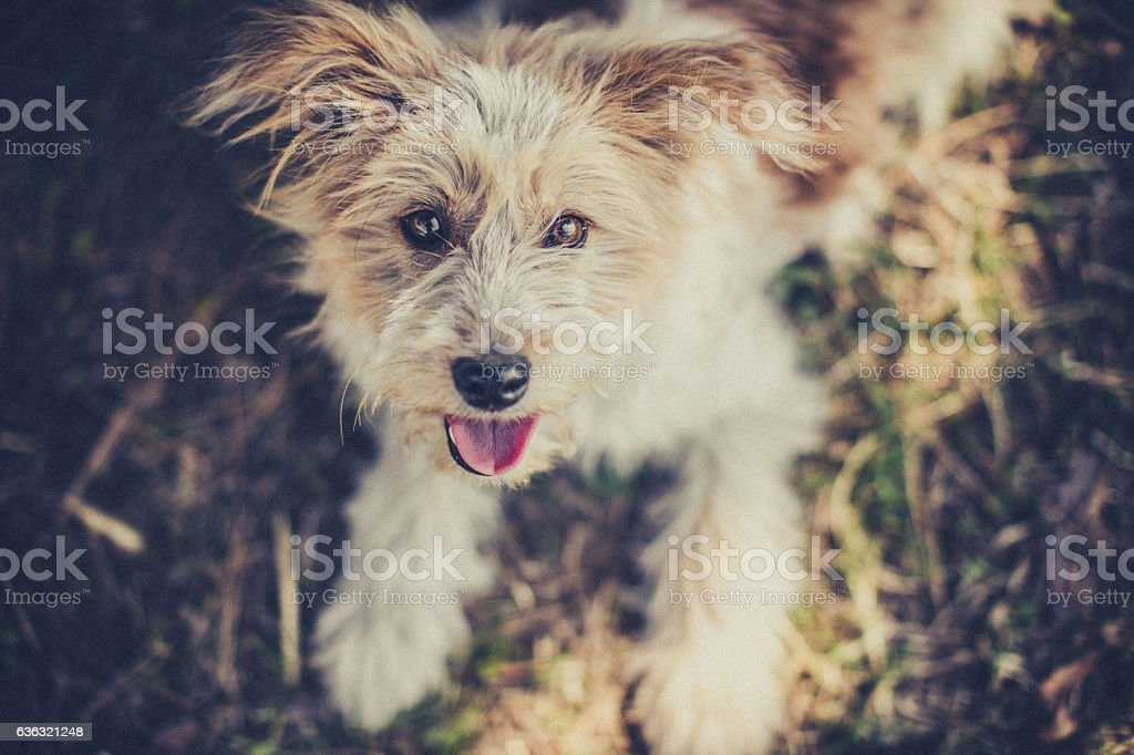 Fluffy dog playing in meadow stock photo