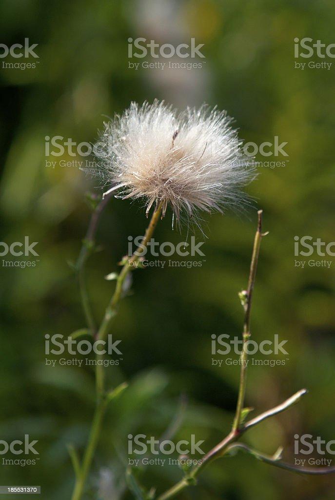 fluffy royalty-free stock photo