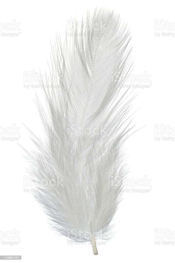 Fluffy white feather on a white background royalty-free stock photo