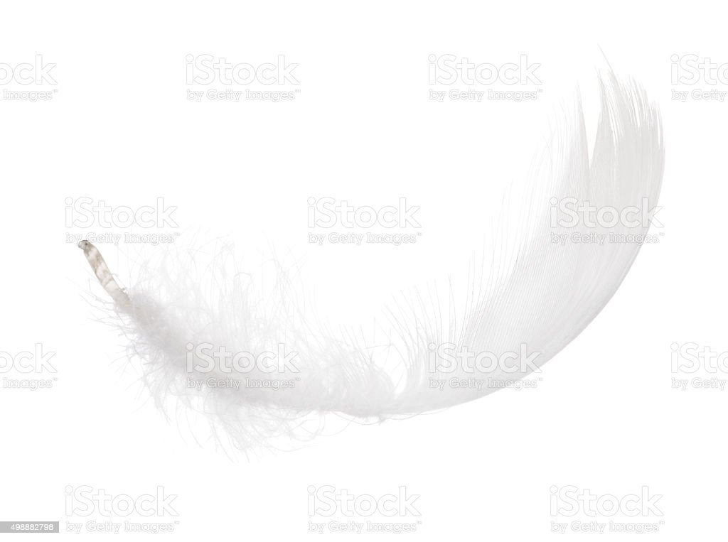 fluffy white isolated feather curl stock photo