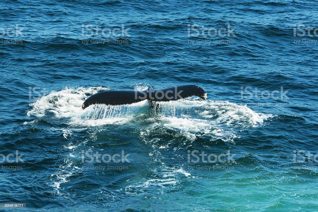 Fluke vom Wal stock photo